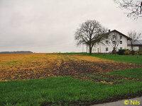 3)  Bild von Nils [Gelbe Wiese].jpg