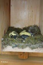 Tote Vögel Bild 2.jpg