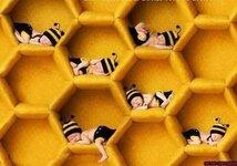 BienenBabys.jpg