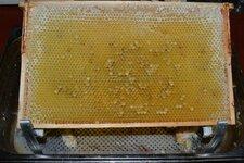 PollenHonigWabe.jpg
